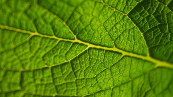 Coreenergy blad
