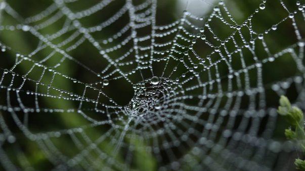 Edderkoppespin - vores arbejdsliv og fremtid